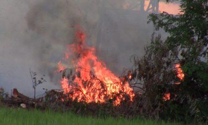 Campo in fiamme a Rescaldina LE FOTO