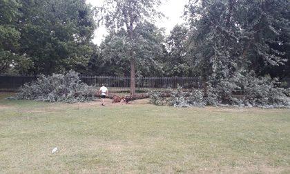 Paura in piscina a Rho: vento abbatte un albero