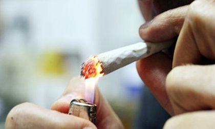 Ha della droga nascosta negli slip: denunciato pusher 22enne
