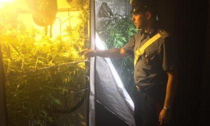 Piantagione di marijuana in casa: arrestato 34enne