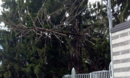 Albero pericolante a San Vittore Olona dopo il maltempo