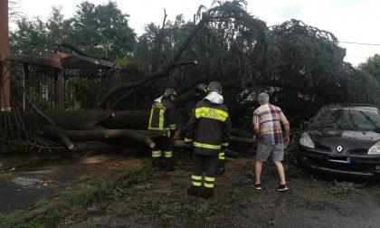 Paura a Cerro Maggiore: albero cade su un'auto in marcia FOTO