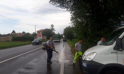 Maltempo, crolla un albero sulla Varesina: colpita un'auto