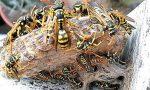 Cinque studenti punti da vespe durante l'ora di ginnastica