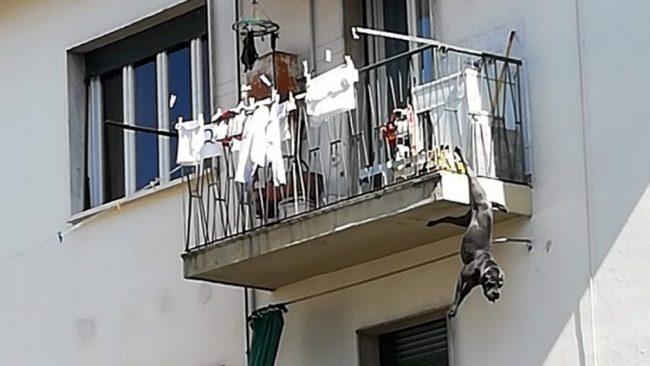 Cane rimane appeso per una zampa al balcone: salvo per miracolo FOTO