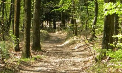 Ritrovamento nei boschi a Tradate: 200 munizioni della seconda guerra mondiale