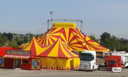 """Vandali contro il Mexican Circus a Rovello, gli animalisti: """"Non siamo stati noi"""""""