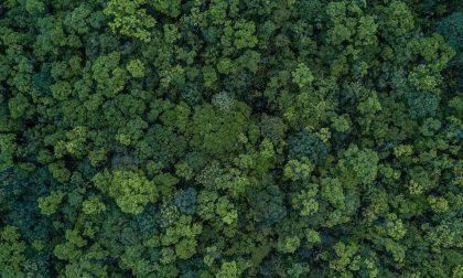 Riforestare la Lombardia: 10mila nuovi ettari di verde entro il 2030