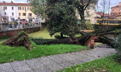 """Albero caduto al Parco della Repubblica: """"L'avevamo segnalato da tempo"""""""