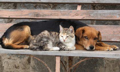 Cani e gatti randagi, serata di beneficenza con Mondo Vagabondo