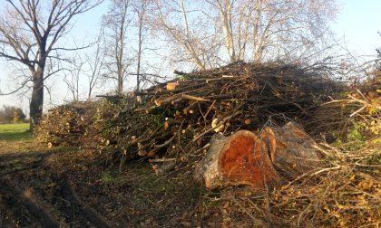 Piante abbattute nel Parco dei Mulini, Legambiente non ci sta - FOTO