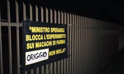 """""""Macachi liberi!"""": manifesti degli animalisti anche a Origgio"""