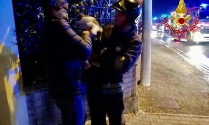 Incendio a Venegono, fiamme sconfitte. Salvato anche il micio di casa