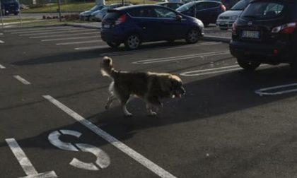 Abbandona due cani vicino al market e fugge