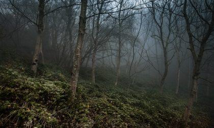 Urta un'auto a Senago e poi scappa nel bosco
