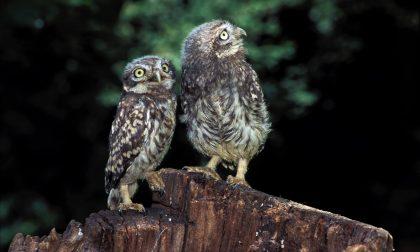 Oltre 2000 uccelli censiti di 54 specie diverse nel Parco del Ticino