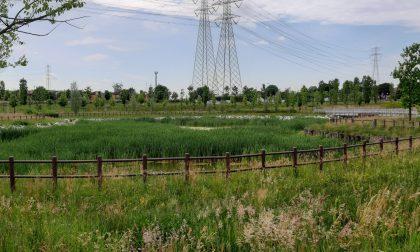"""Parco Sansovino, erba alta e """"giungla"""" nel laghetto"""