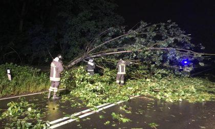 Cade un grosso albero: paura per due passeggeri – LE FOTO