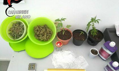 Serra di marijuana nel box, 42enne finisce ai domiciliari
