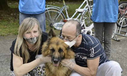 Emergenza Covid: anche la cagnolina Quincy è tornata a casa – VIDEO