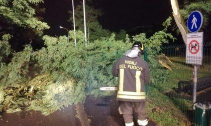 Maltempo: fulmine abbatte un albero che cade in strada FOTO
