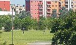 Sevizi di pulizia intensificati in parchi e giardini