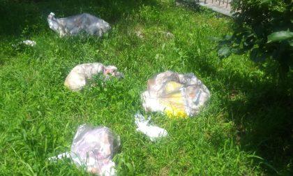 Butta la spazzatura nel parco: la denuncia di UILDM