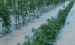 Maltempo, violenta grandinata sull'Abbiatense:  frutta e verdura triturate, danni anche sul mais