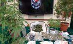 I Falchi sequestrano un chilo di marijuana