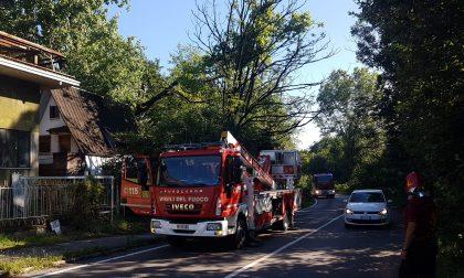 Albero a rischio caduta, intervento dei Vigili del fuoco – FOTO