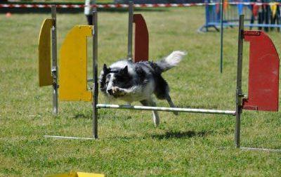 Rho: Un percorso di agility dog nel parco di via Terrazzano