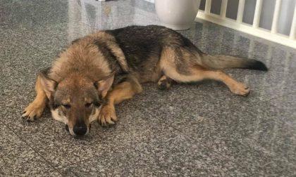 Cane cade nel canale, l'appello dei proprietari