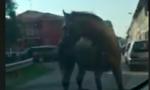 Cavallo a spasso… ma dove è finito?