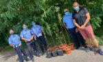 Piante di marijuana nel Parco dei Mulini: la Polizia Locale le sequestra – LE FOTO