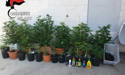 Diciotto piante di marijuana: arrestato