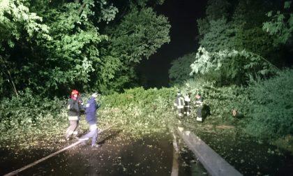 Tre alberi cadono in strada per il maltempo FOTO