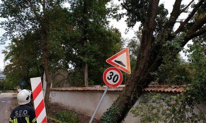 Maltempo, alberi caduti a Arese e Bollate