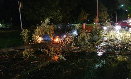 Pioggia e vento fanno cadere un albero che travolge un'auto FOTO