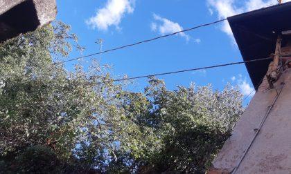 Albero crolla sulla cinta e sui cavi dell'elettricità FOTO