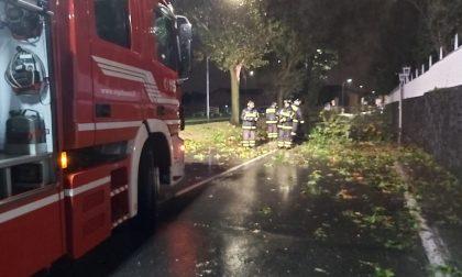 Alberi caduti e transenne a terra a causa del vento nel Legnanese