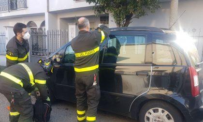 Cane rimane chiuso in auto con le chiavi: pompieri lo salvano