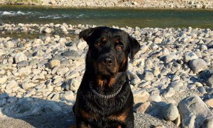 6 cani (5 morti) folgorati dalla corrente tramite tombini: gli animalisti vogliono sporgere denuncia contro i sindaci