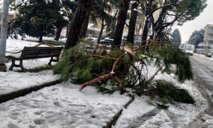"""""""A Rho cadono fiocchi di neve ma soprattutto alberi"""": la denuncia della Lega FOTO"""