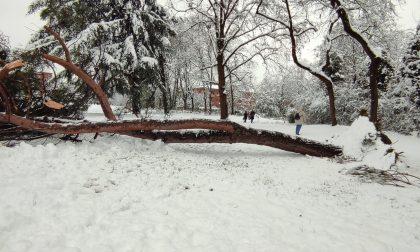 Crollo albero a Cornaredo, le parole del sindaco