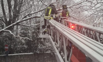 Albero pericolante per la troppa neve: pompieri in azione