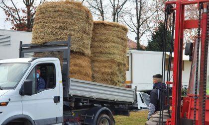 Circo bloccato dalle norme anticontagio, gli agricoltori in soccorso degli animali FOTO