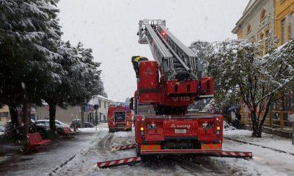 Albero pericolante fuori da scuola, arrivano i pompieri FOTO