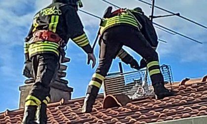 Gattino non riesce a scendere dal tetto, lo salvano i pompieri