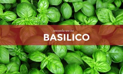 Tutti ortisti: da venerdì in edicola con i nostri settimanali i semi di basilico