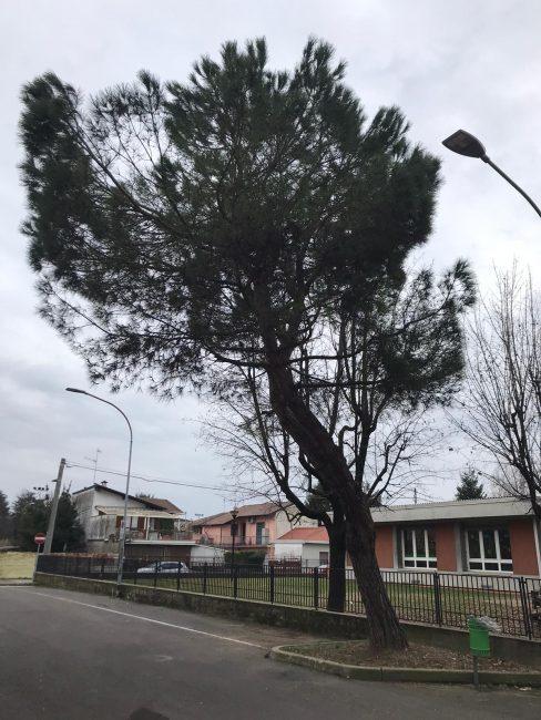 san vittore albero via roma asilo nido